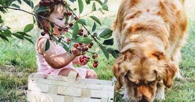 ما الفاكهة التي يمكن أن تأكلها الكلاب؟