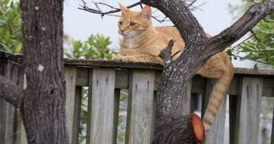 كم من الوقت يمكنك ترك القط وحده؟
