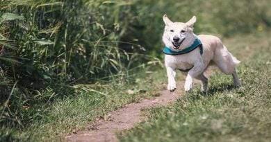 كيف يمكن للطبيب البيطري المساعدة في تصحيح سلوك الكلب
