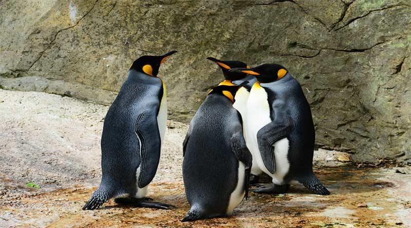 كم عدد أنواع طيور البطريق الموجودة؟