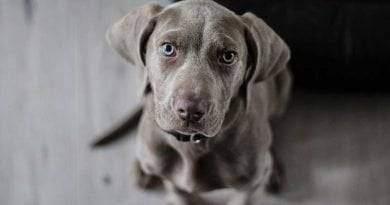 كم عدد الجراء التي يمكن أن تنجبها الكلب؟