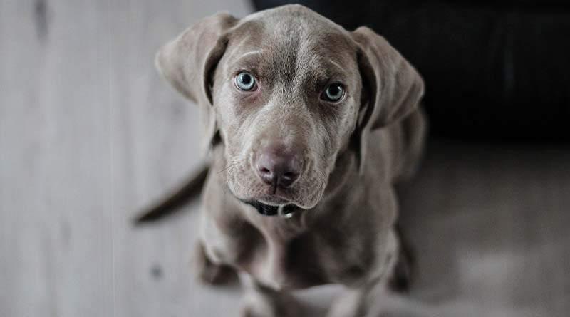 كم جرو تلد الكلاب
