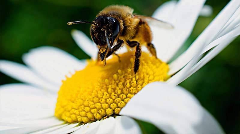 مراحل نمو ملكة النحل
