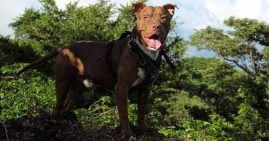 أكثر 10 كلاب خطورة في العالم