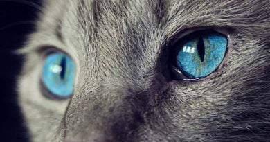 اسباب بكاء القطط
