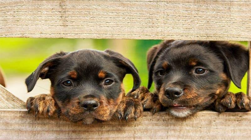 أسماء الكلاب