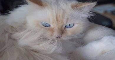 أكثر 5 سلالات قطط مهيبة