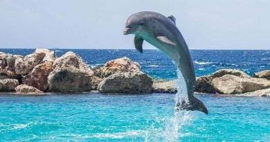 نمط تنفس الدلفين