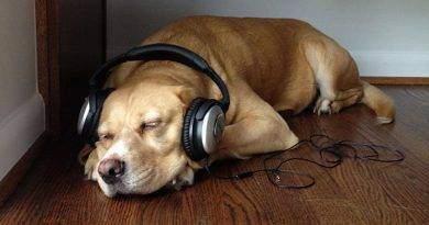 هل يمكن للموسيقى أن تريح الكلاب؟