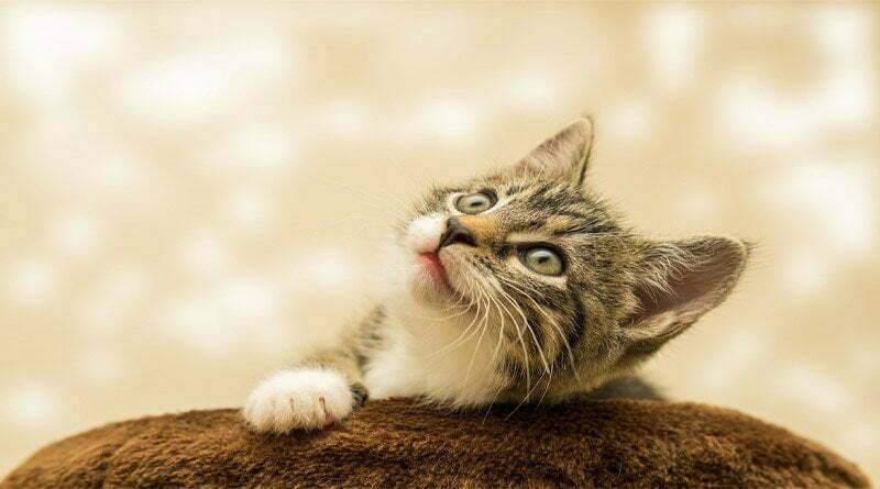 لغة جسد القطط