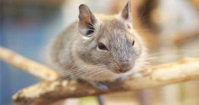 هل الفأر يخاف من الضوء ؟
