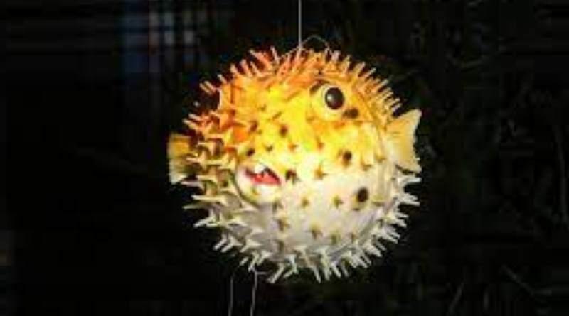 سمكة النيص احد أجمل أسماك الزينة في العالم