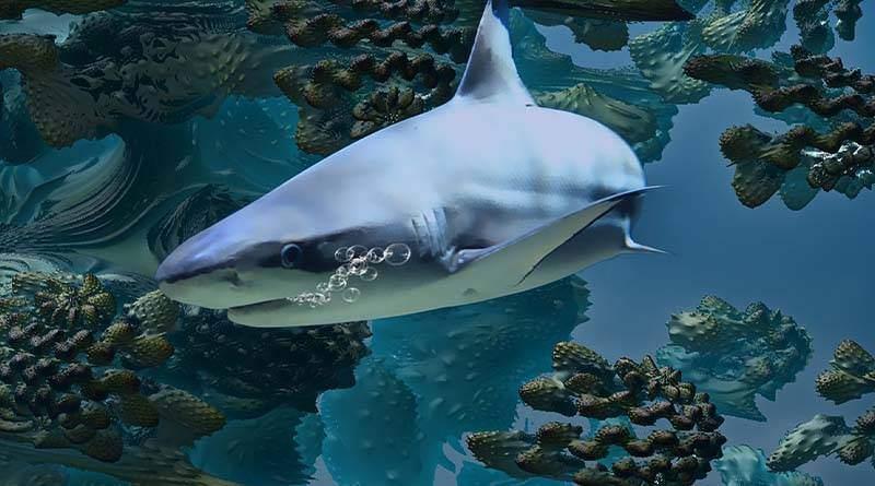 استراتيجية تكاثر سمك القرش