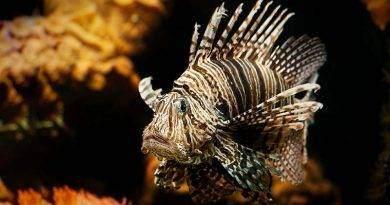 أجمل أسماك الزينة في العالم