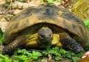 ماذا تاكل السلاحف ؟
