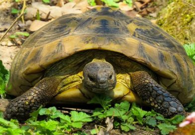 ماذا تاكل السلاحف