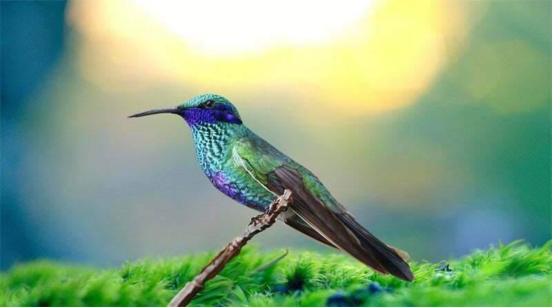 4 أشياء يجب معرفتها عن الطائر الطنان