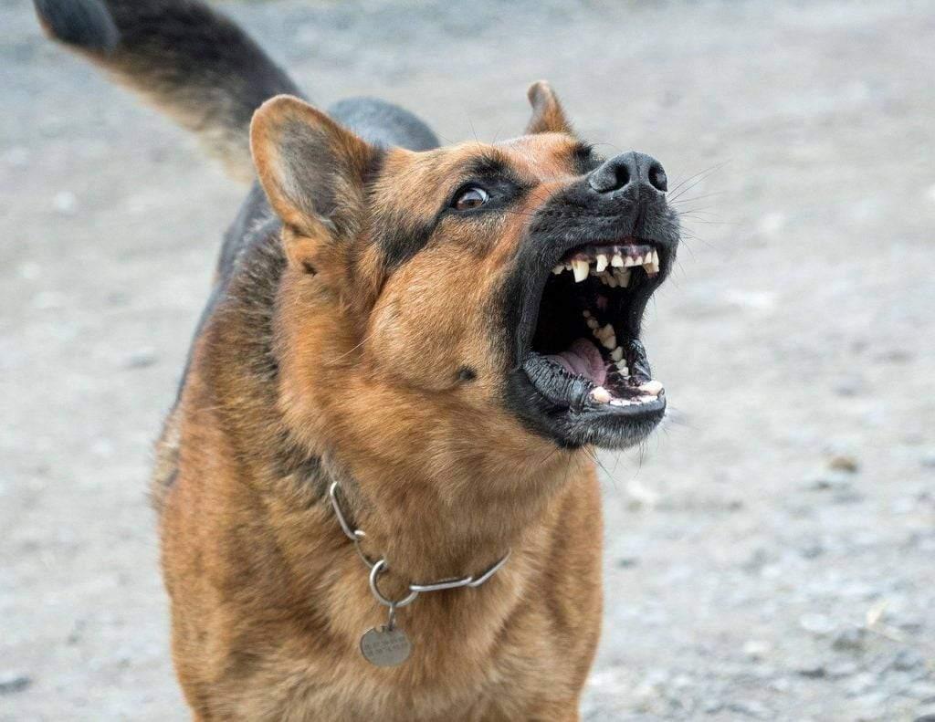 اقوى كلاب في العالم