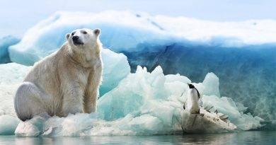 كيف تحمي الحيوانات نفسها من البرد؟