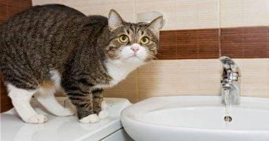لماذا تحب القطط الانضمام إلينا في الحمام؟