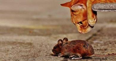 10 اشياء تخاف الفئران
