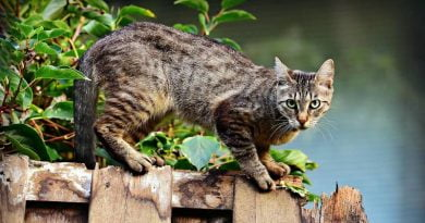 كيفية تهدئة القطط في موسم التزاوج