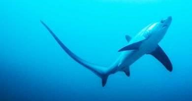 القرش الدراس الموطن والخصائص