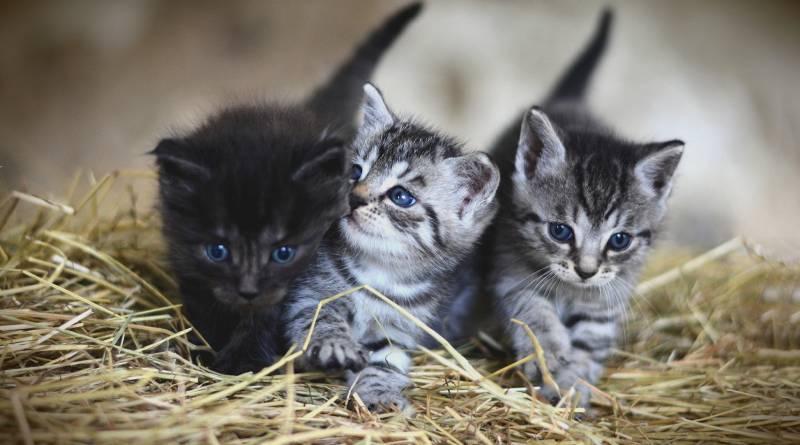 نصائح حول العناية بالقطط الصغيرة