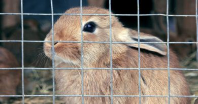 لماذا يعض الأرنب قفصه؟