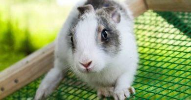 10 نصائح لحماية الحيوان