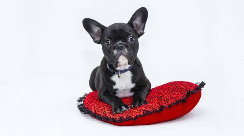 لماذا تخدش الكلاب منطقة النوم بأقدامها؟