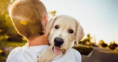 لماذا لا يجب عليك أن تعانق كلبك