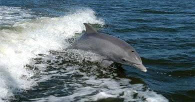 هل الدلفين يلد ام يبيض ؟