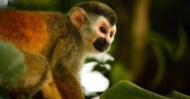 ما هو القرد؟ > بحث شامل